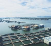 Làng bè Long Sơn điểm đến không thể bỏ qua khi du lịch Vũng Tàu